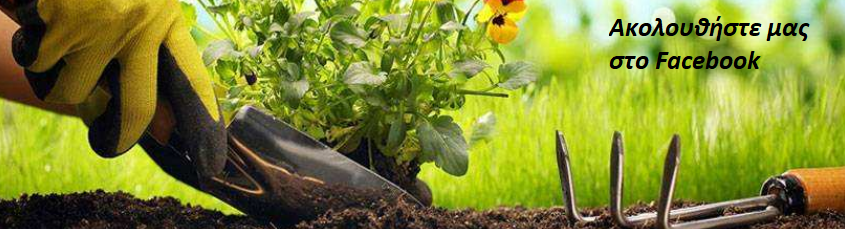 https://www.facebook.com/Garden-Sampson-Flower-313122402602496/?modal=admin_todo_tour