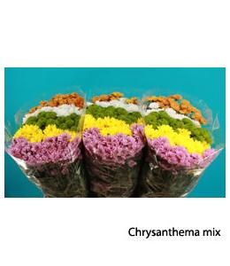 Chrysanthema mix