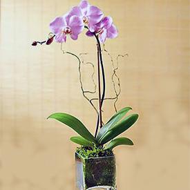 Φυτά Συνθέσεις