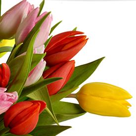 Λουλούδια φρέσκα για το σπίτι