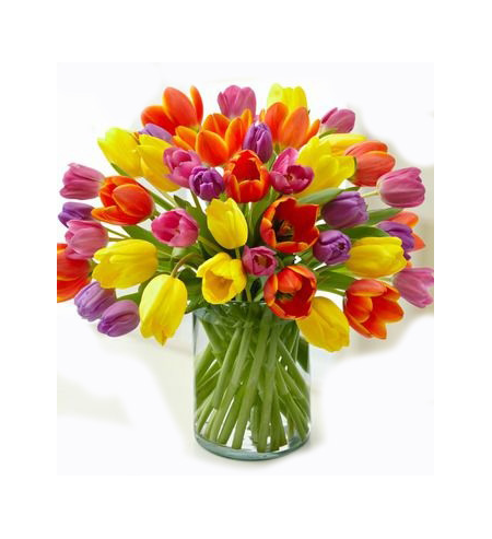 Tulips in various colors