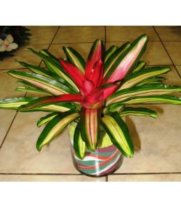 Ανθεκτικά φυτά σε γυάλα