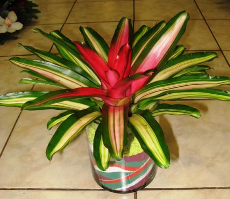 Resistant plants in fishbowl