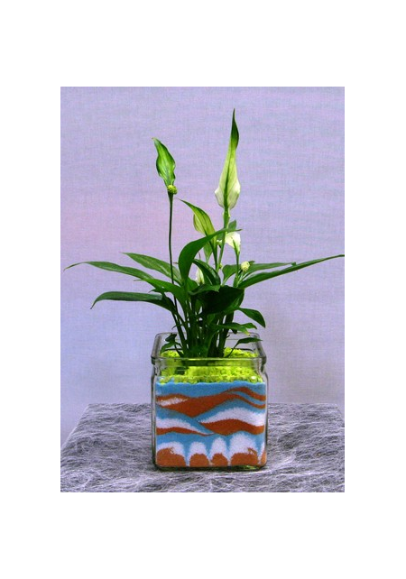 Spathiphyllum in glass with decorative sand